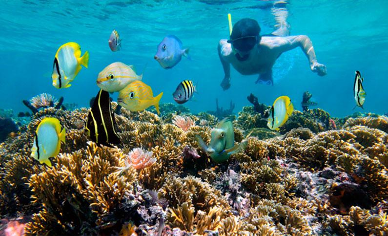 caribe-mergulho