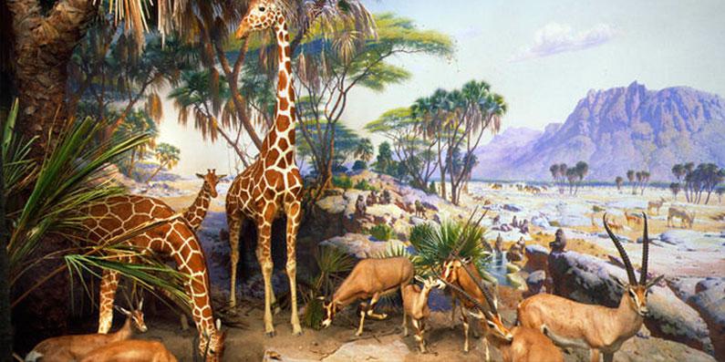 dica-viagem-nova-york-passeio-museu-historia-natural-dinossauro