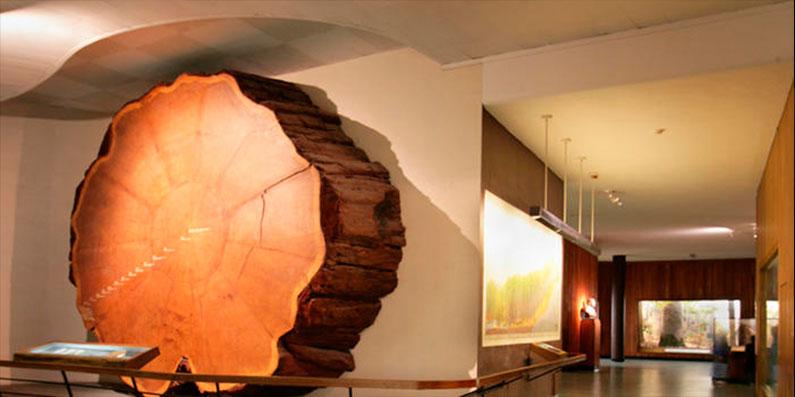 dicas-viagem-nova-york-museu-historia-natural
