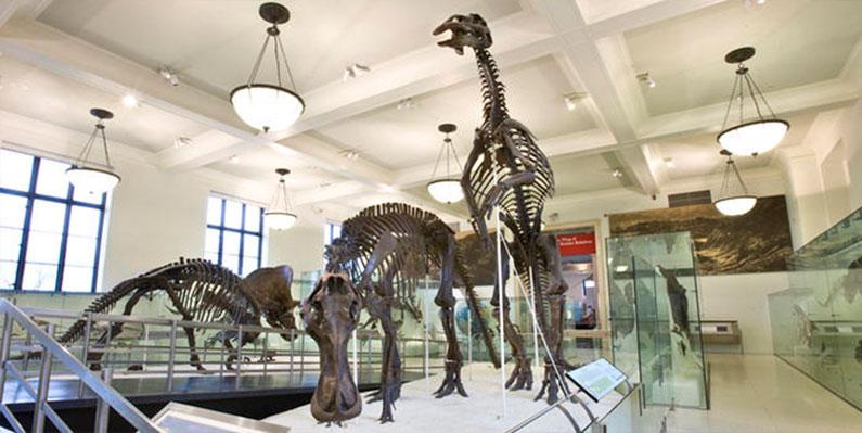 museu-de-historia-natural-de-nova-york-dicas