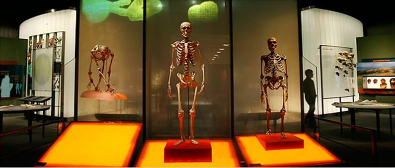 museu-historia-natural-lucy