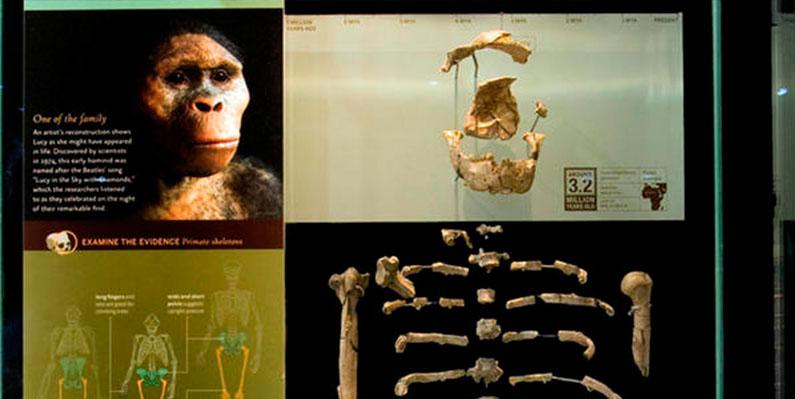 museu-historia-natural-ny-parte-ancestrais