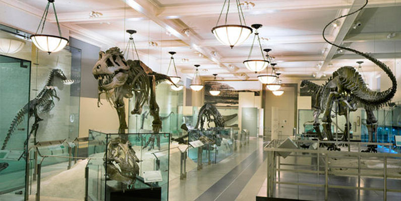 museu-nova-york-dica-historia-natural