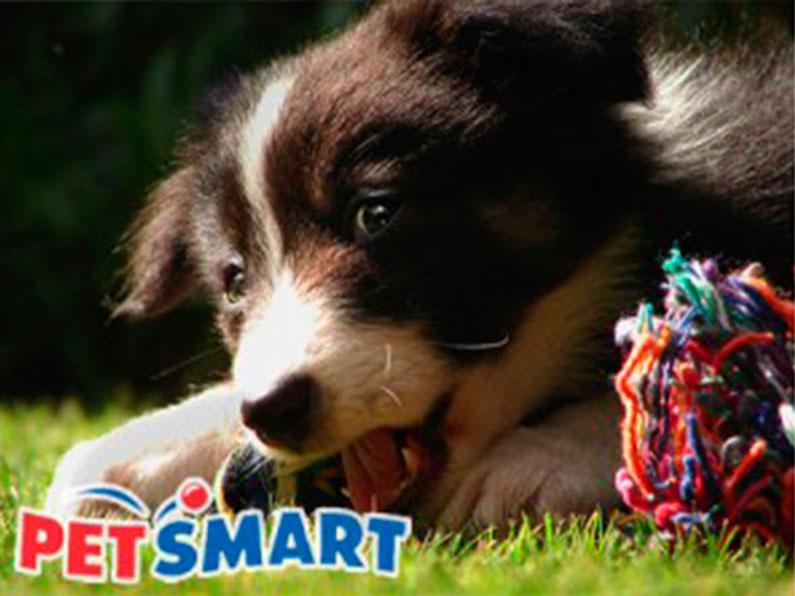 produtos-cachorro-compra-cachorro-gato-disney