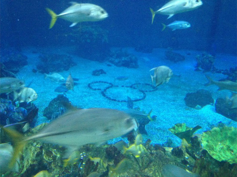 aquario-gigante-na-disney