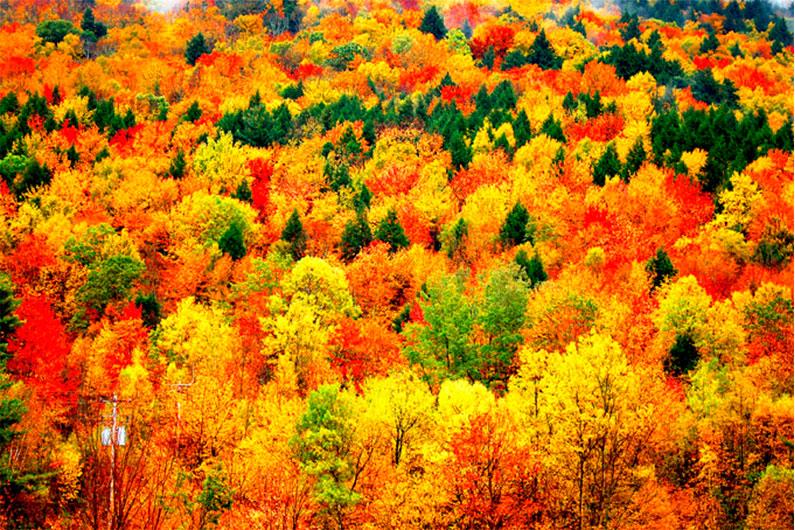 arvores-no-outono-nos-eua
