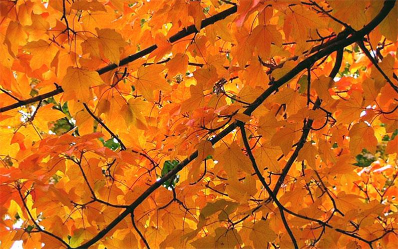 outono-em-nova-york-manhattan