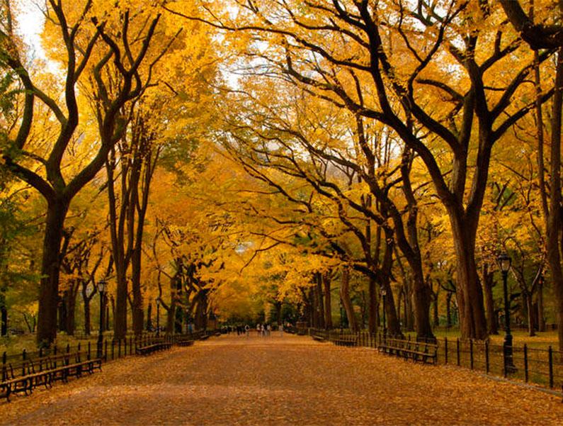 outono-nova-york-folhas-vermelhas