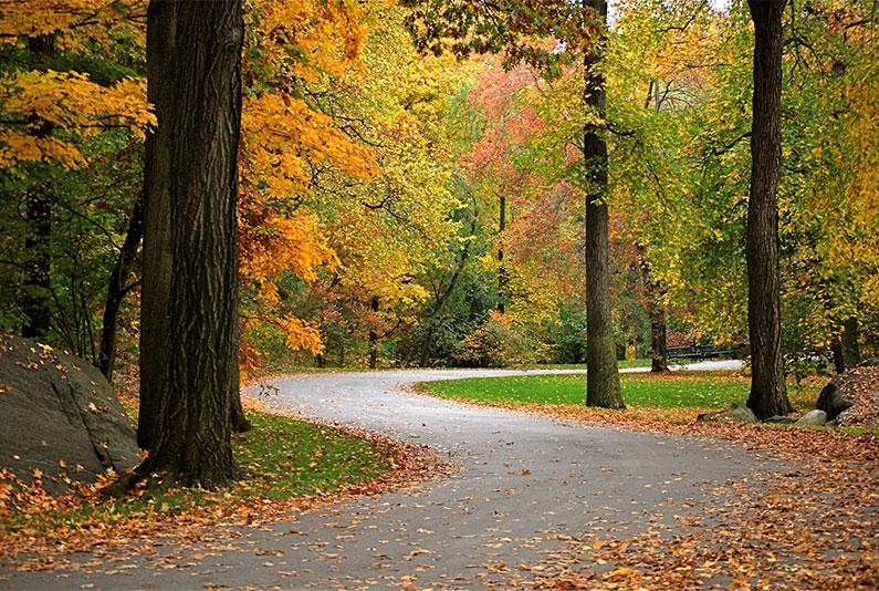 outono-nova-york-onde-ver-arvores