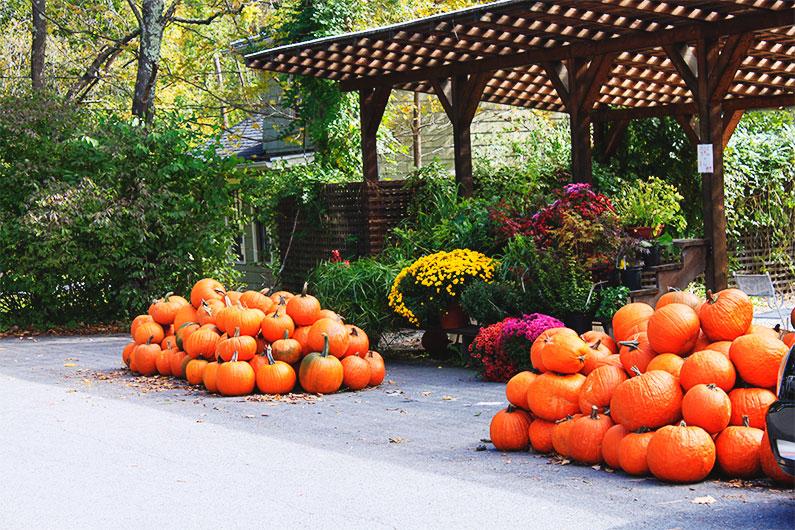 aboboras-de-halloween-nova-york-upstate-dicas