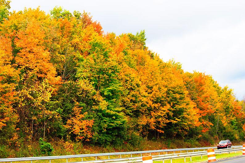 folhagem-de-outono-nova-york-dicas