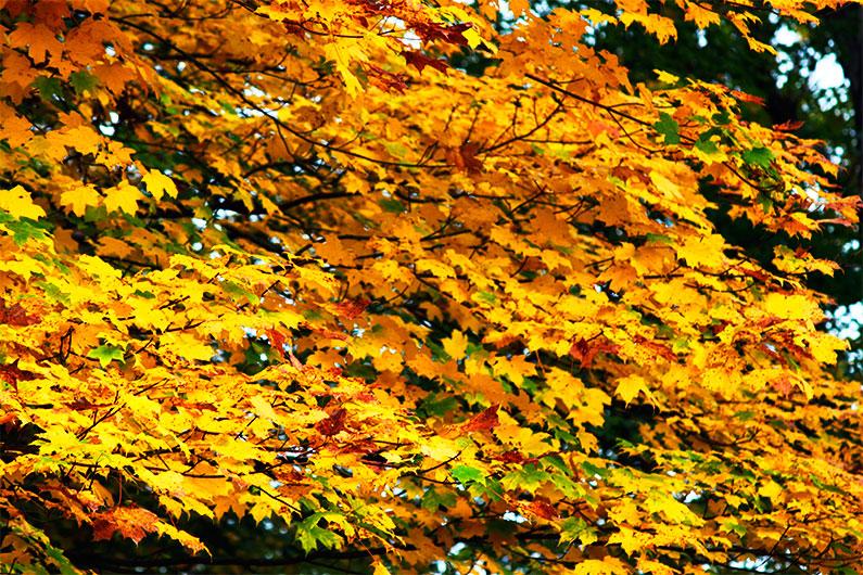 folhas-outono-estados-unidos-dicas-nova-york